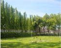 Celestial lawn 3
