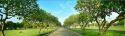 Mactan Island Memorial lawn lot
